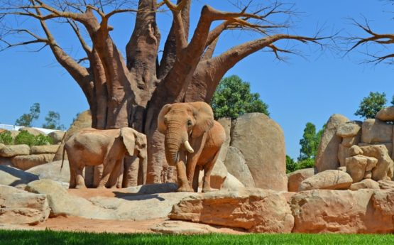 Bioparc Valencia is one of the most important nature parks in Spain.